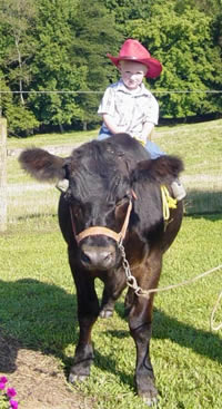 picture on steer